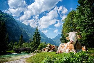 nature photos on Flickr | Flickr