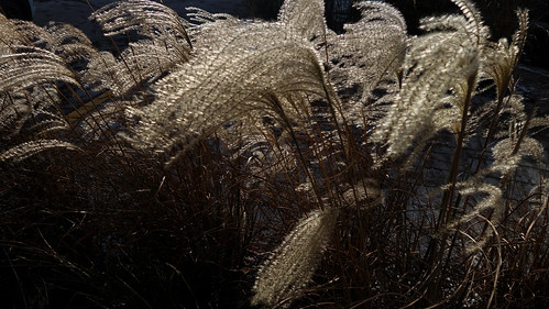 Winter Grass | by Stephen Downes