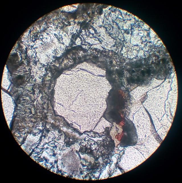 Kelyphitic rim on garnet  (30 µm thin section, PPL)