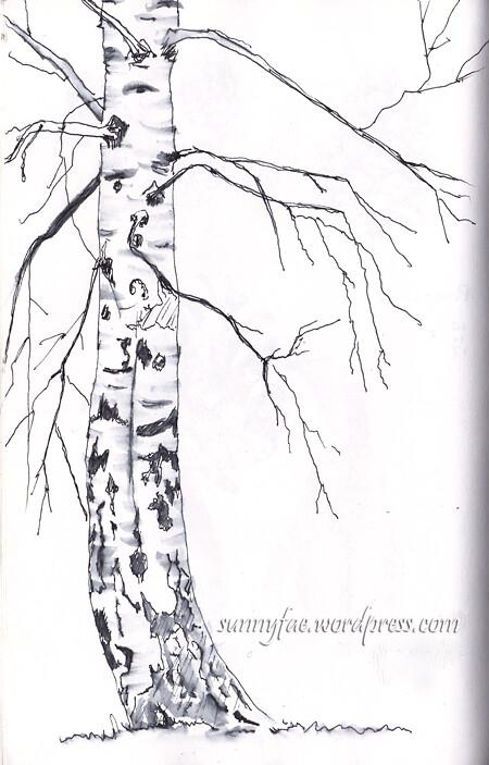 birch tree shetch