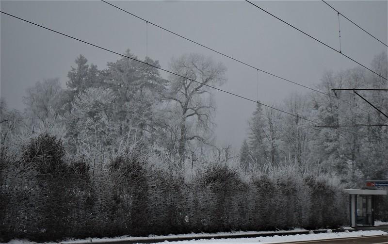 Frosty Morning 23.01 (7)