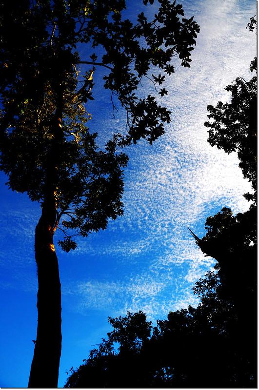 巨木與雲彩