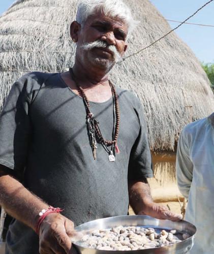 पारंपरिक फल-सब्जियों के बजाय राजस्थान के किसान मूंगफली जैसी नकद फसलों को अपना रहे हैं