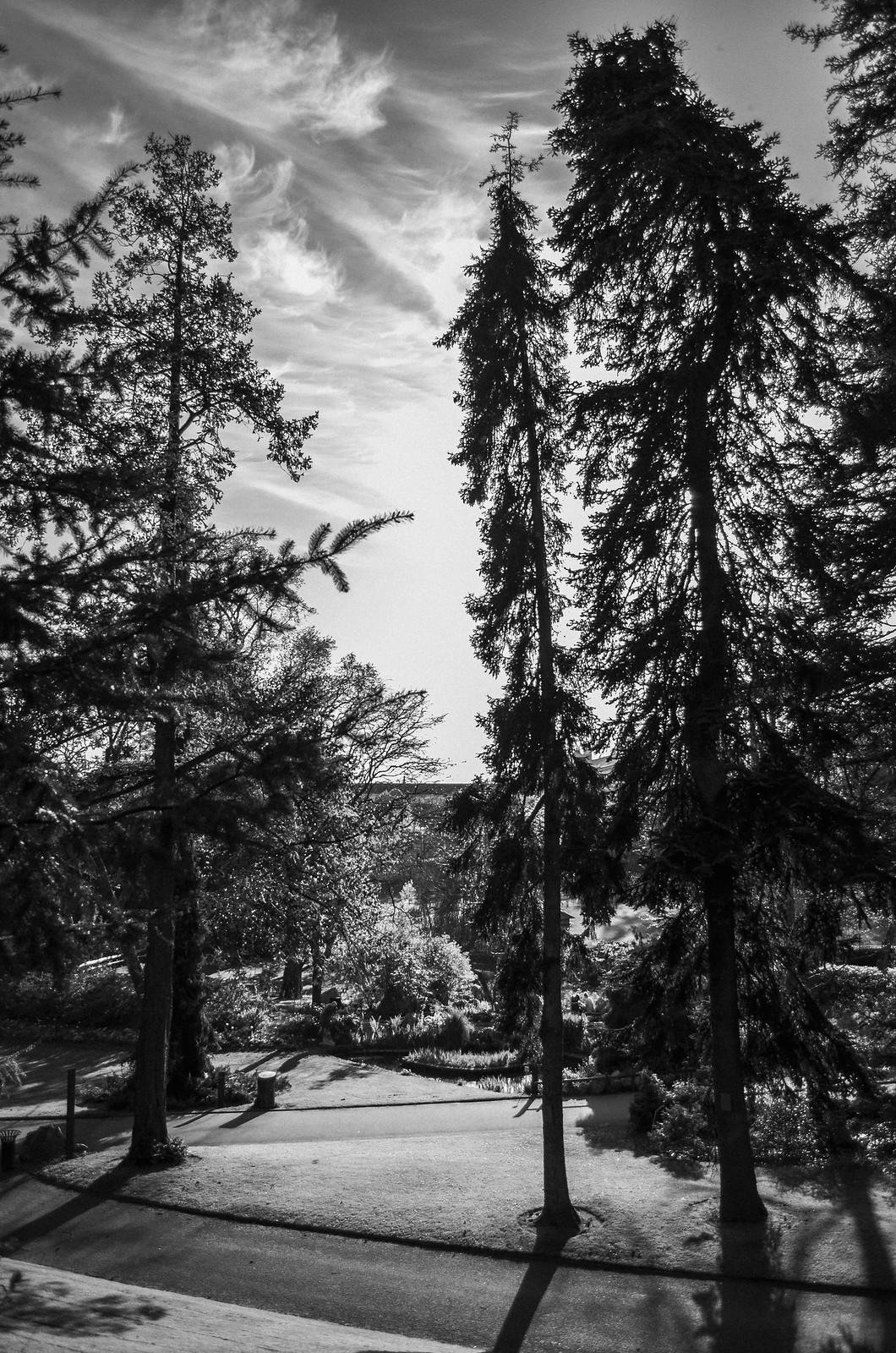 Arbres géants Jardin des plantes Nantes