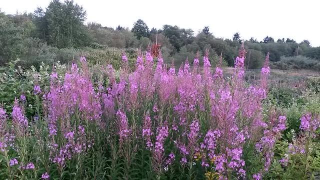 Nice wildflowers