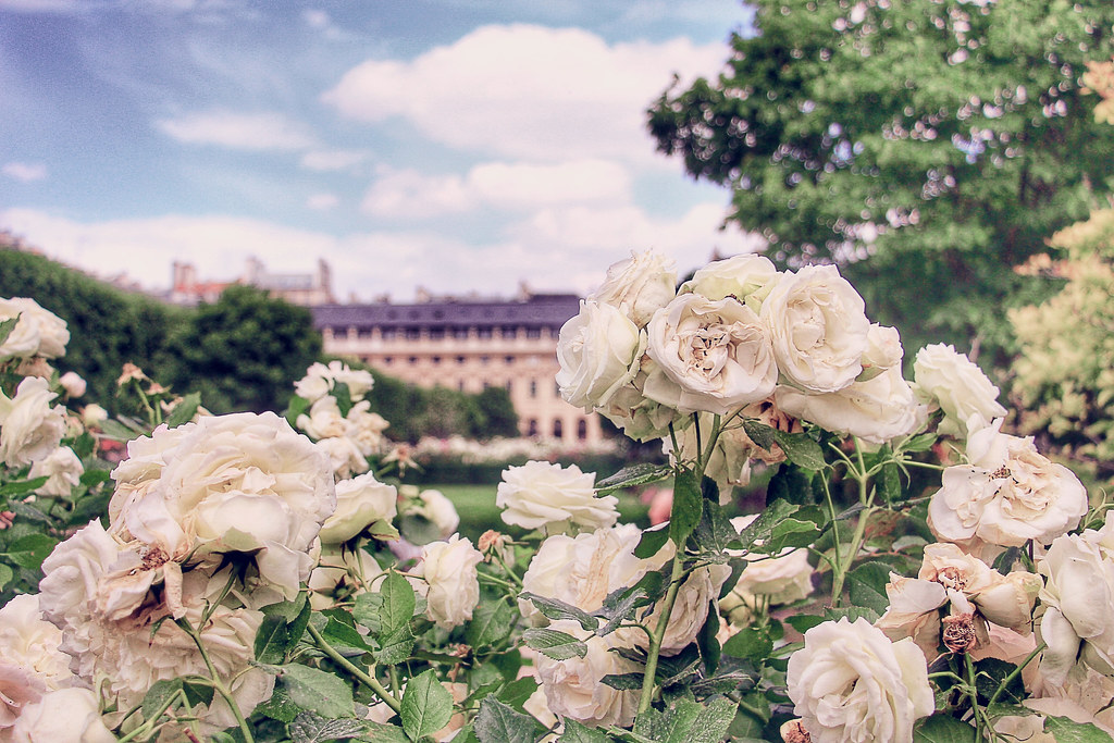 Le Jardin du Palais Royal , 24 hours in Paris guide