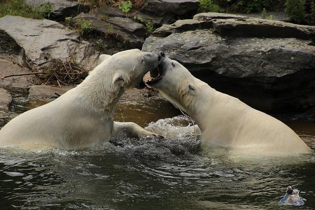 Tierpark Berlin 24.06.2014  31