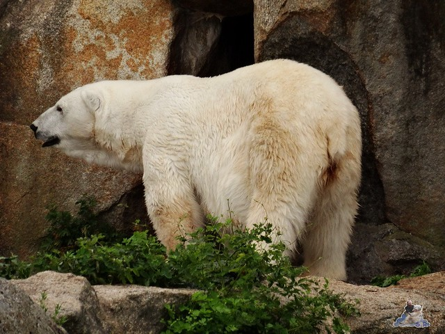 Zoo Berlin 26.06.2015  85