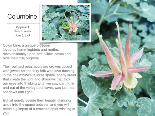 Columbine_fairy_June3.001 | by teach.eagle