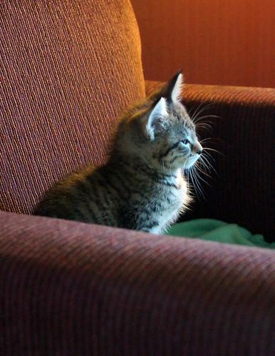 blogpaws-kittensC01617