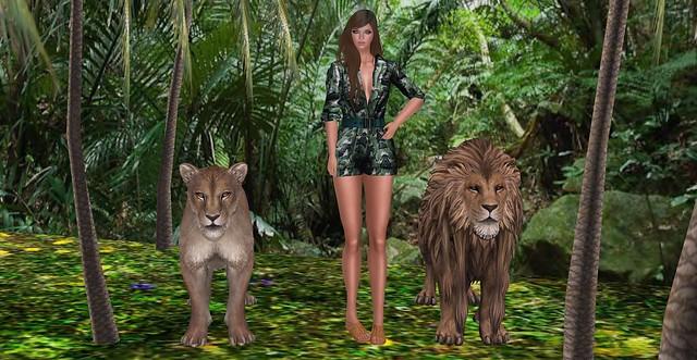 Saturday Safari