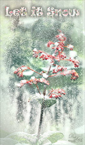Image of some snowy berries
