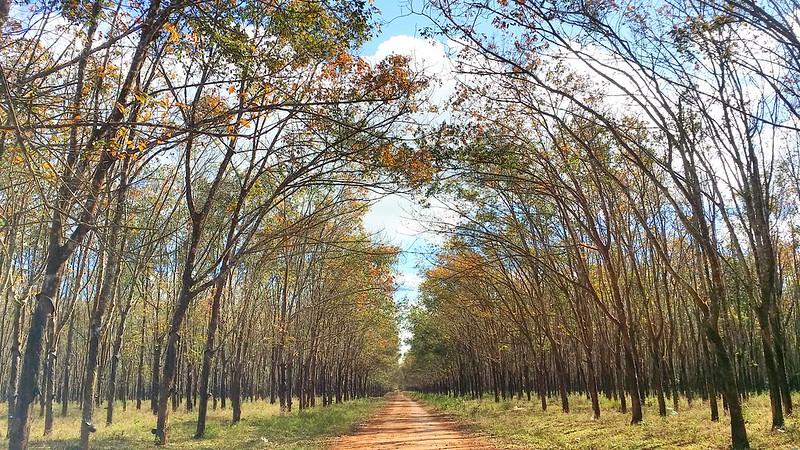 Kinh nghiệm du lịch Pleiku-rừng cao su