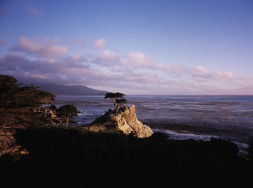 The Lone Cypress, Pebble Beach (17-mile drive) | by artandscience