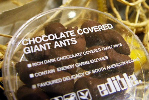 chocolate covered ants Finding ants to chocolate cover so we can have some free protien in these hard times.