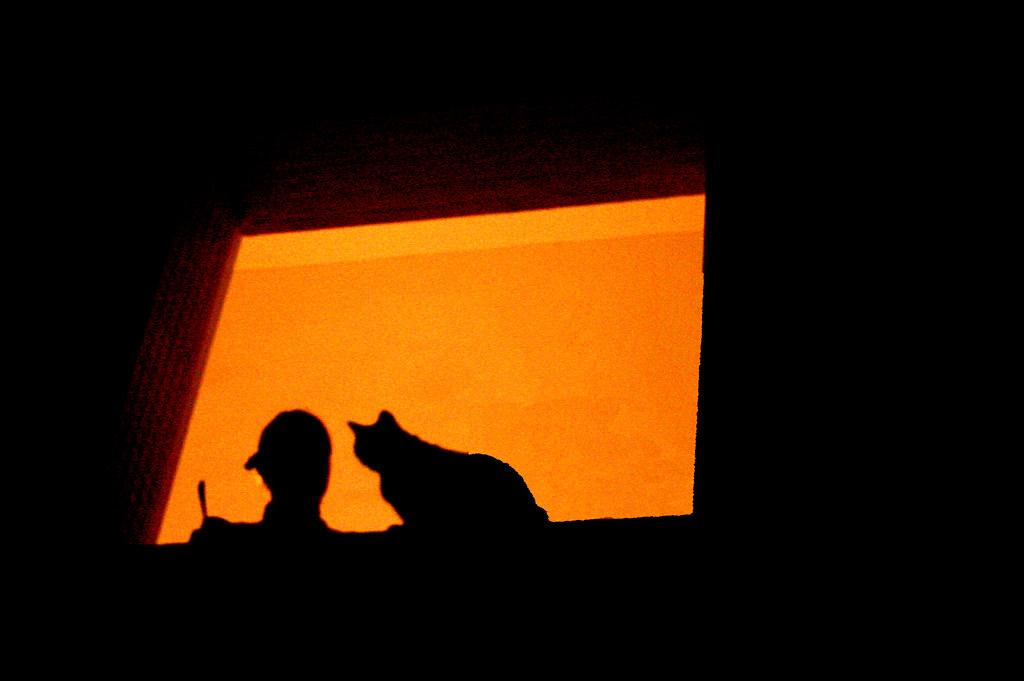 Night chat in orange yaniv golan flickr - Chat orange ...