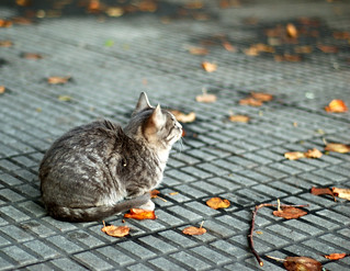 kitten with leaves | by Alcino