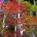 Fall at Sanzen-In 三千院の紅葉