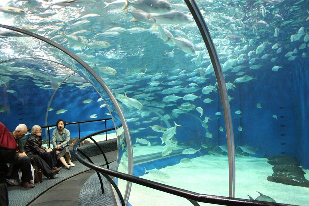 Risultati immagini per shanghai ocean aquarium