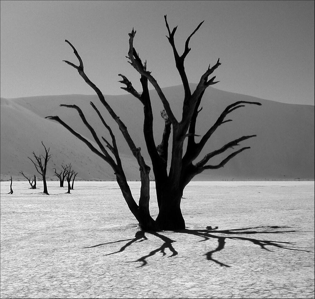 20041217   Dead Vlei, Namibia 004