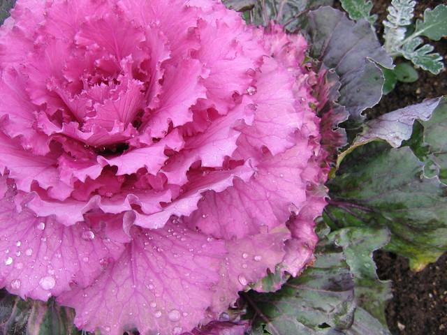 Flowers, Seattle, WA | Explore djwudi's photos on Flickr ...