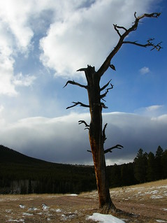 Flowers Road Snag | by cyberhobo