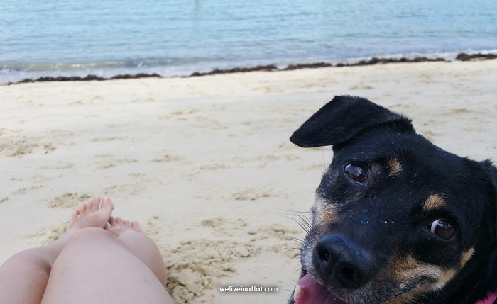 dog-tanjung-beach-3