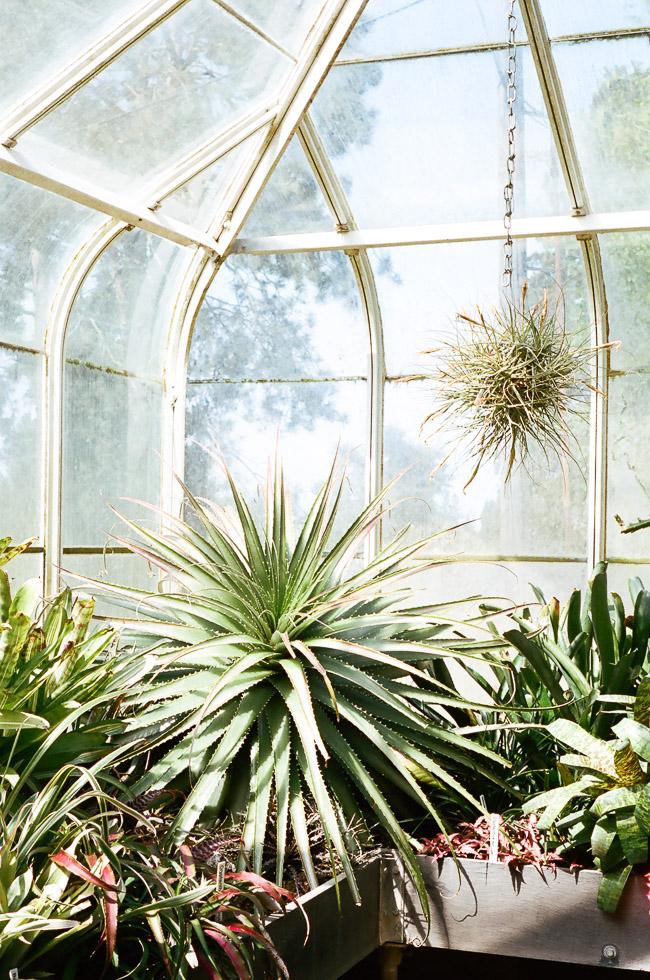 volunteer conservatory park-3