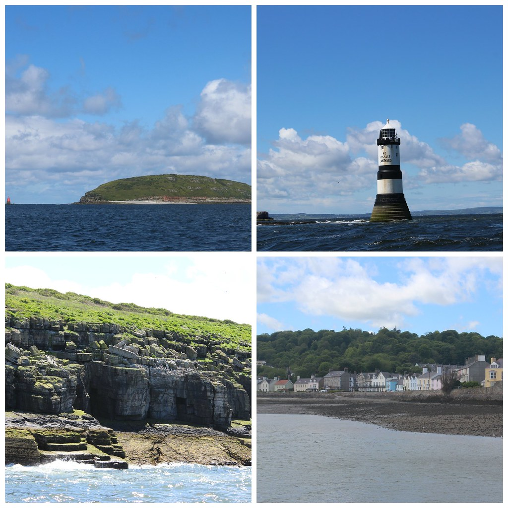 Puffin Island Collage
