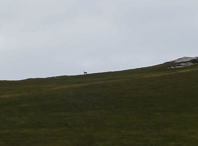 Scotland-57.jpg
