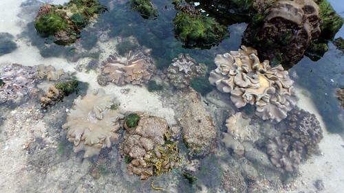 Living reefs of Pulau Tekukor