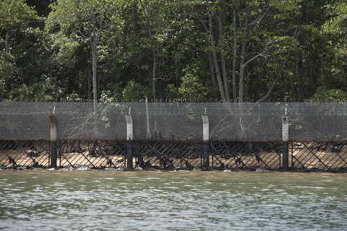 Mangroves behind Security Fence on Northern Ubin after oil spill in East Johor Strait