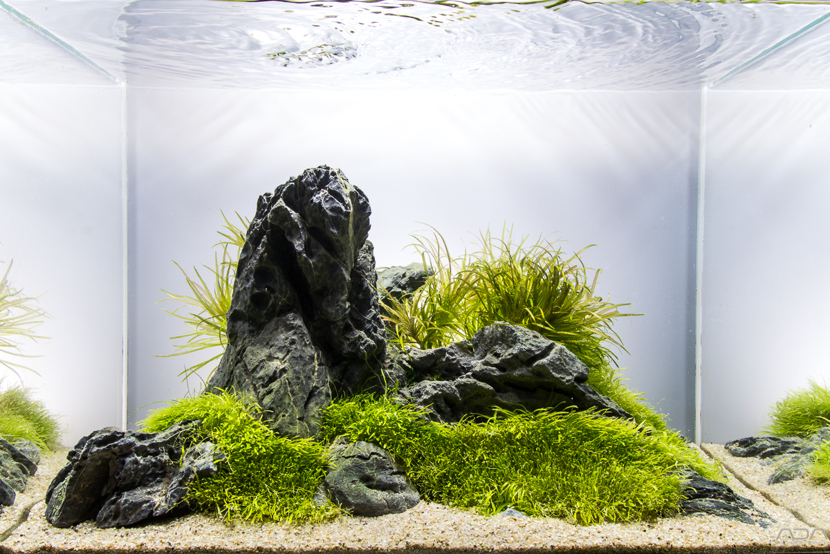 Aquascape No 4 Ada 45p The Planted Tank Forum