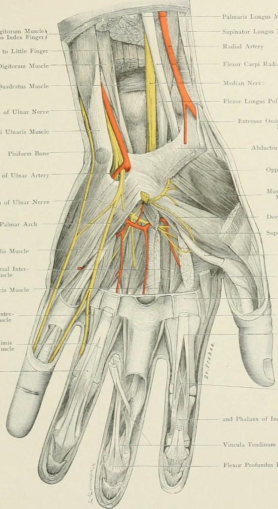 Fein Quizlet Anatomie Und Physiologie Kapitel 1 Ideen - Menschliche ...