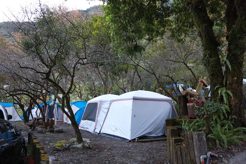 被梅樹圍繞的營地