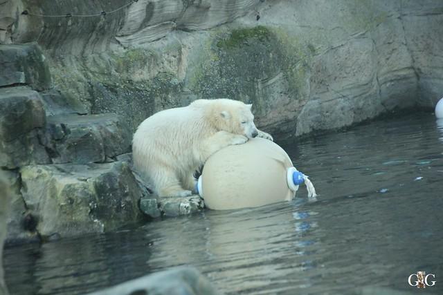 Besuch Zoo am Meer 29.12.201635