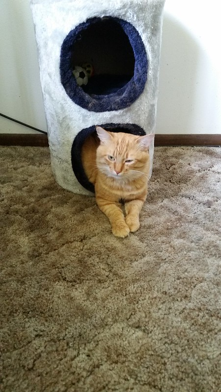 My Brother's Cat
