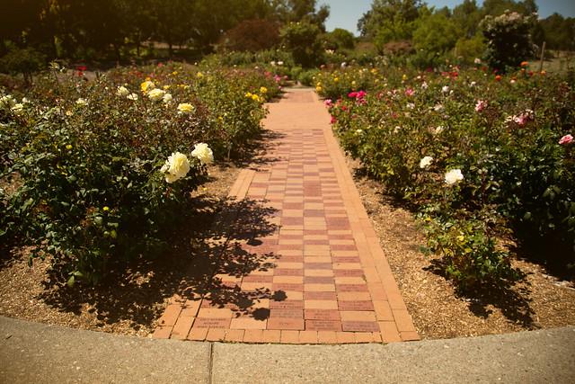 Garden - Aureate Rose Stroll