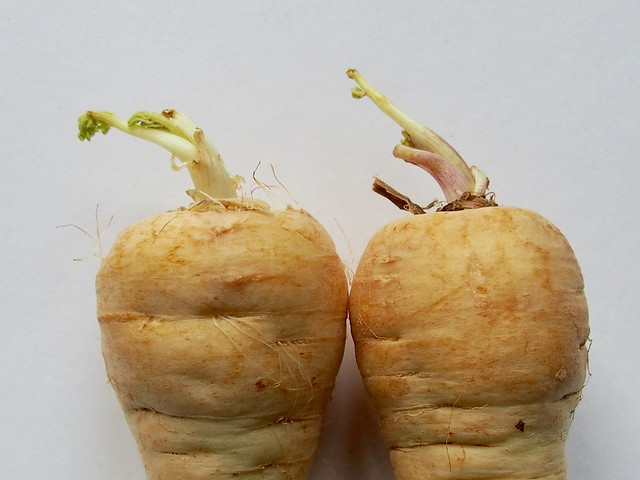 Tendrils: Sprouting parsnip tops