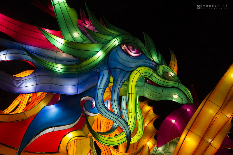China Light Zoo – Antwerp – 2016 12 27 – 02 – Copyright © 2016 Ivan Coninx