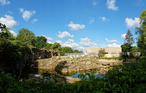 Panorama pic polar bear enclosure!