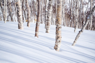 a photo of a snowy birch forest
