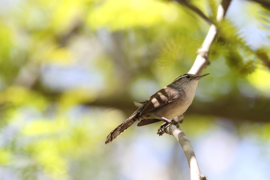 041115_birds06