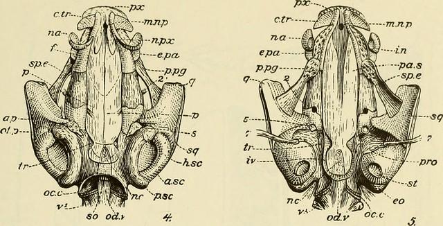 booksubject:Amphibians photos on Flickr   Flickr
