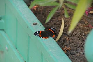 102 Vlinder