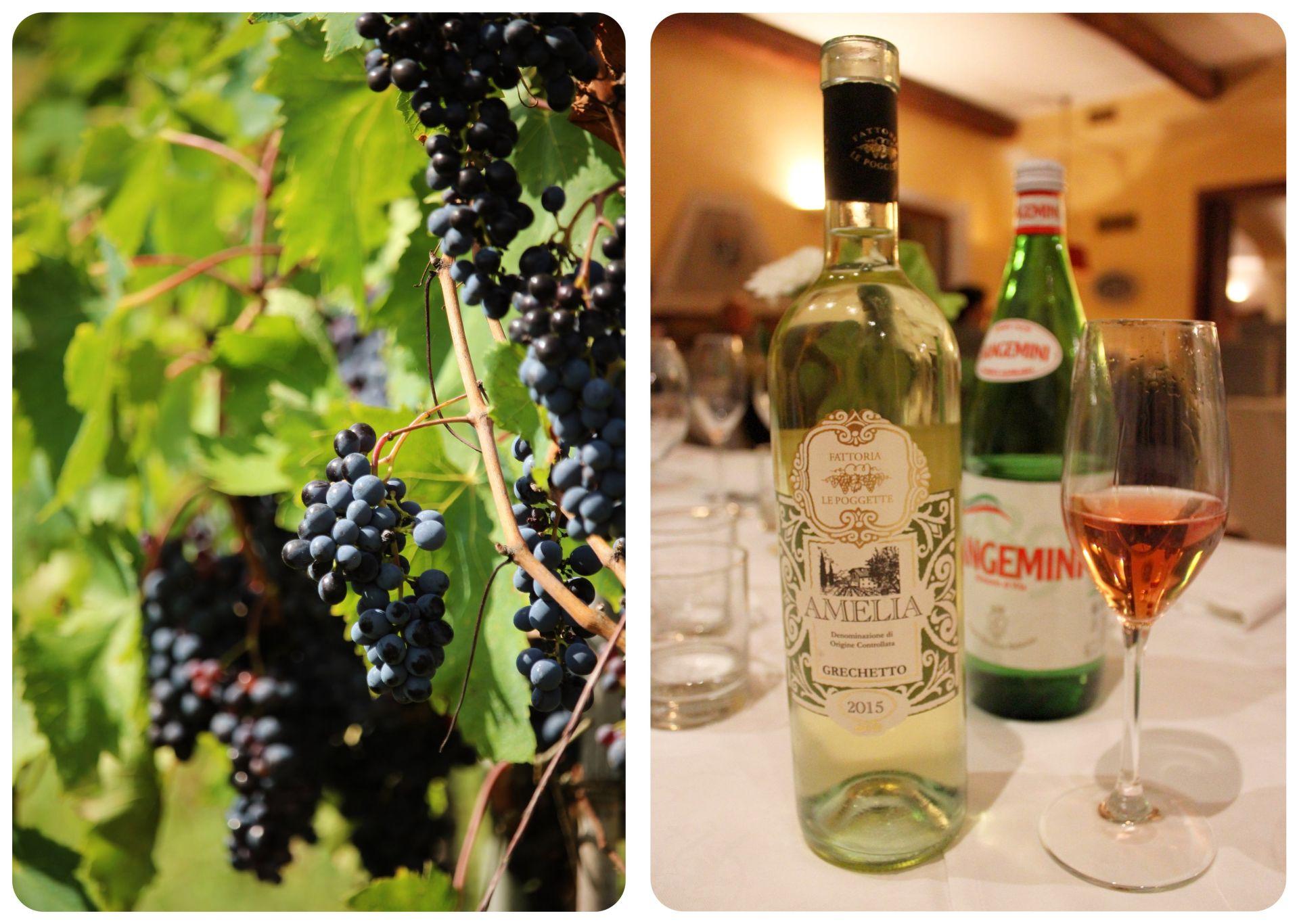 Amelia wine Umbria