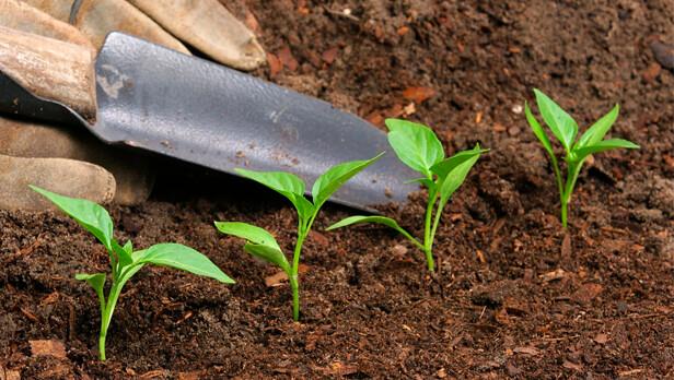 plantas-fertilizante-616x348