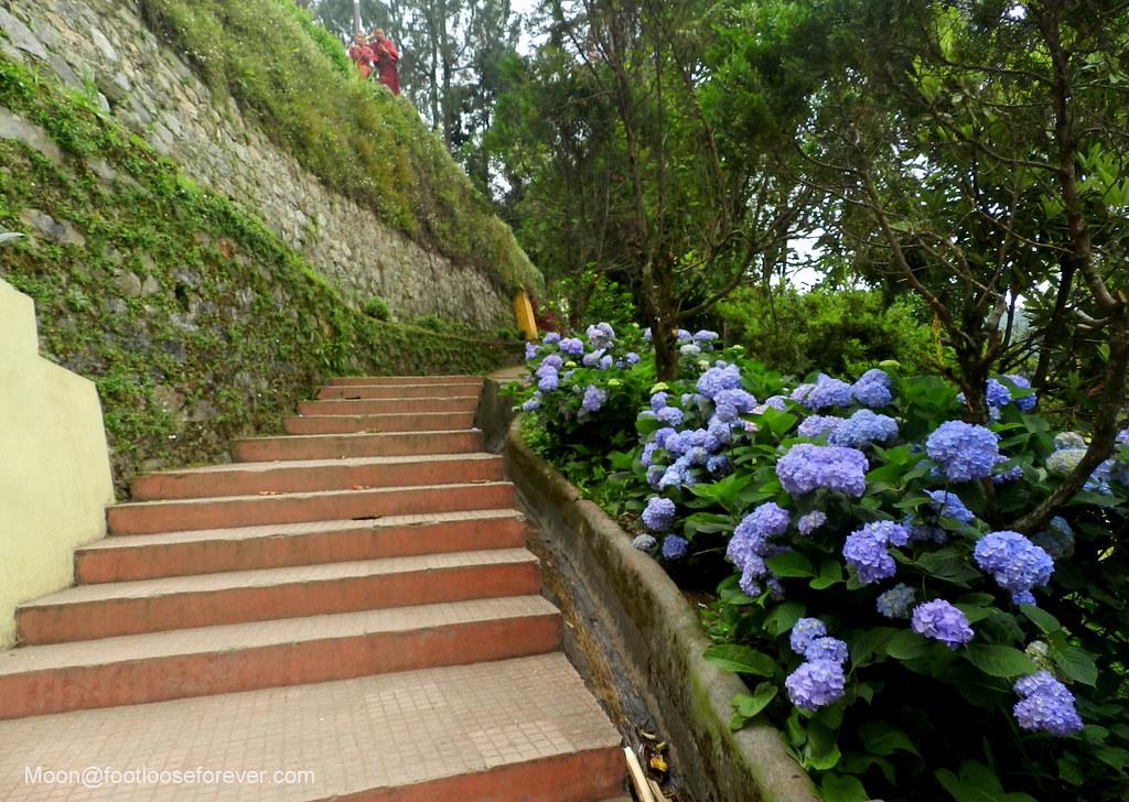 rumtek monastery, gangtok, sikkim, stairs, blue flowers