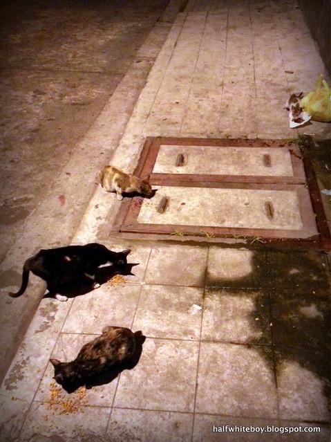 stray cats 04