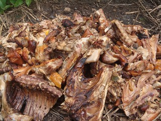 位於陽明山國家公園內,散置一地的雞骨頭。圖片來源:陽明山國家公園管理處